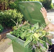 Cardboard-only waste collections due to start