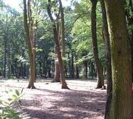 Rotherham MPs attack woodland sell-off plans
