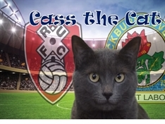 VIDEO: Psychic moggy predicts outcome of Rotherham United's next match