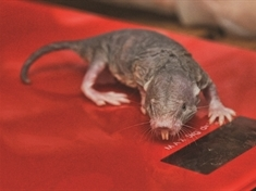 Naked mole rats come to Rotherham wildlife centre