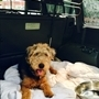 Dotty the dog safe and well after vehicle theft