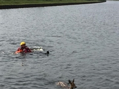 Fireman wades in to rescue deer from canal