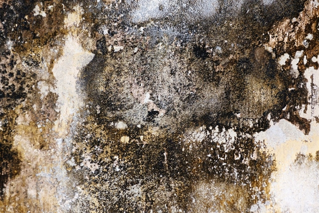 HEALTH & WELLBEING: Damp and Mould Can Affect Your Health
