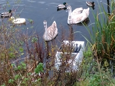 Anger over Catcliffe nature reserve fly-tipping