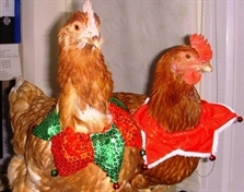 Hens hoping there'll be room at the inn this Christmas