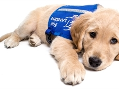 Could you be a puppy socialiser?