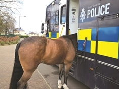 Police bring in horses to give anti-social behaviour the hoof