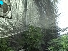 Cannabis farm found in Parkgate property