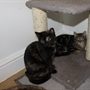Cute kittens looking for rural Rotherham home