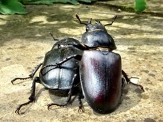 Help! Beetles need you - here's what you can do