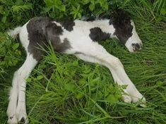 Dead foal find prompts animal charity action