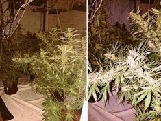 Community tip-off leads to Eastwood cannabis farm find