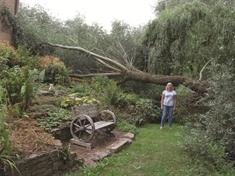 Worried homeowner blasts council after 30ft tree falls onto roof