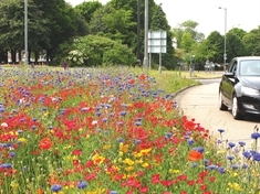 FEATURE: The story behind Rotherham's bloomin' lovely River of Colour