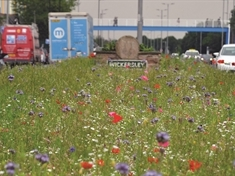 How Rotherham's floral River of Colour became a bloomin' viral smash