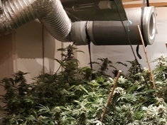Two quizzed after police find cannabis farm in Mexborough attic