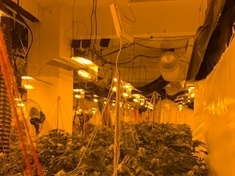 £2million cannabis farm discovered in Mexborough this morning