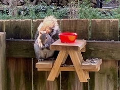 Squirrels snack in Rotherham gardens thanks to Trevor's nutty new tables