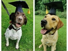 Coppers' canine companions graduate from police dog school