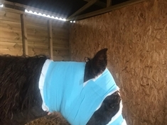 Police appeal for information after fatal attack on pony