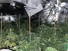 Police discover £100,000 cannabis grow in North Anston